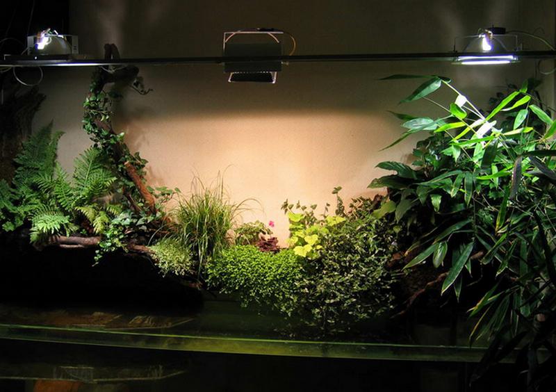 Какие растения выращивать в квартире