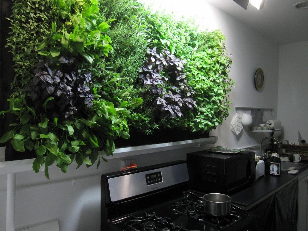 Выращивание зелени в квартире круглый год ожидали