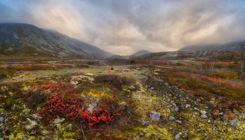 Хибинская горная тундра (фото из открытого источника)