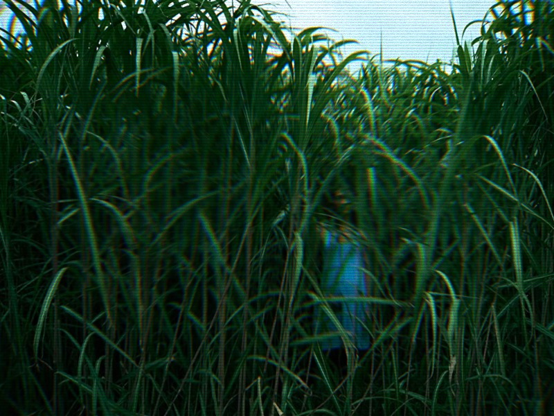 В высокой-траве.jpg