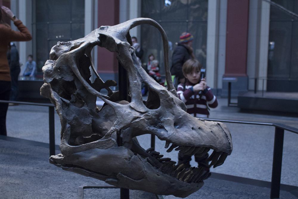 Музей Естествознания Берлин (4)