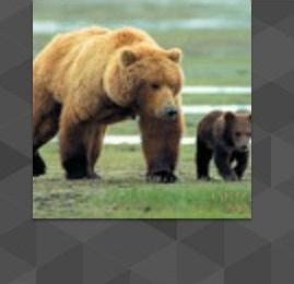 Аккаунт grizly Man на Ютуб.jpg
