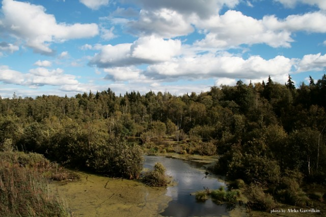 Forest bogs and fluffy clouds in a blue sky