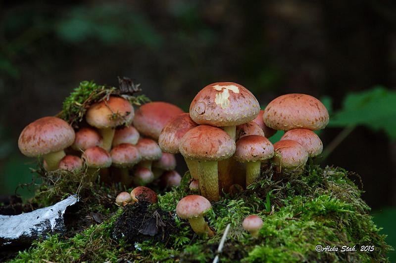 грибы 004
