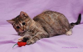 Коты и кошки в добрые руки бесплатно