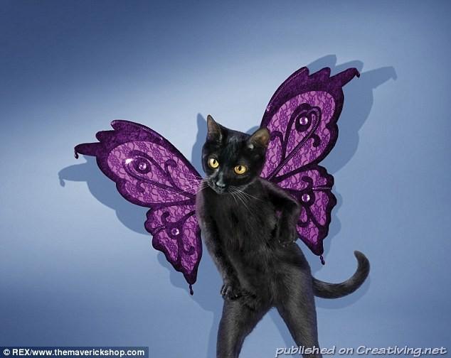кот с крыльями 2