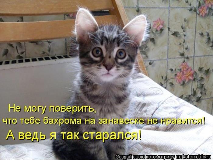 dlyakota.ru_fotoprikoly-s-kotami_1322168150461