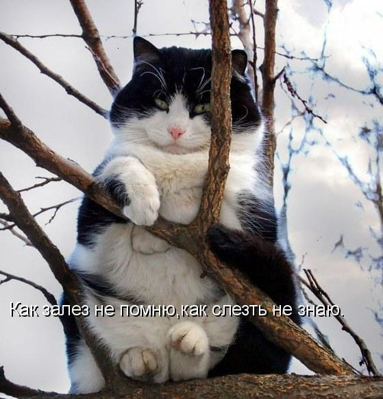funny_cats_08