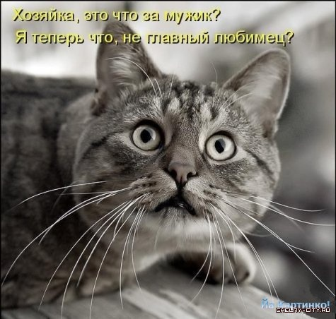 kotomatritsa_3F