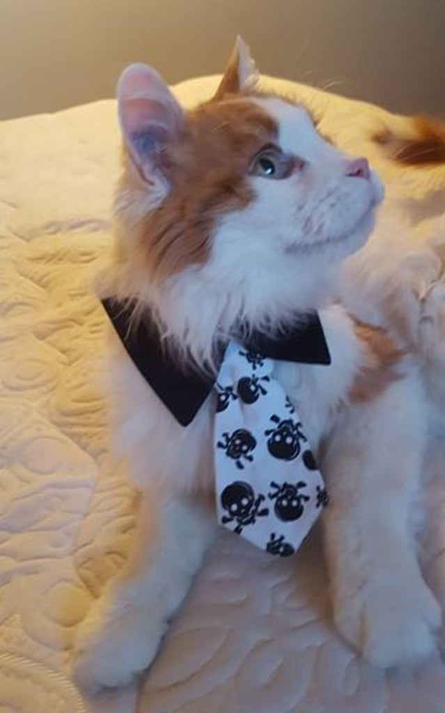 Фото: animaladvocates.com