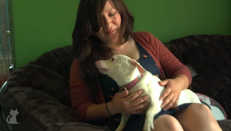 Фото: YouTube / Inbred Chiweenie Finds Happy Home - Tails of Hope /