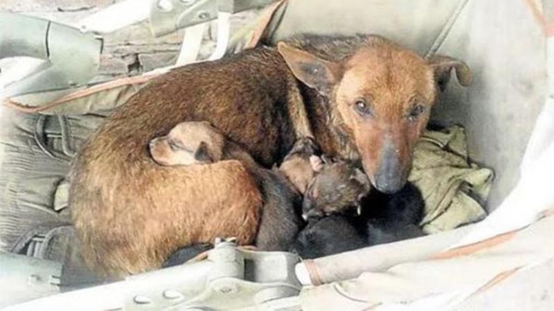 Фото: Seamos Mas Animales Como Ellos - Mundo @ Youtube /