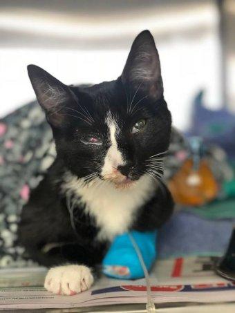 Фото: Мак-кот, пережил полчаса цикла в стиралке