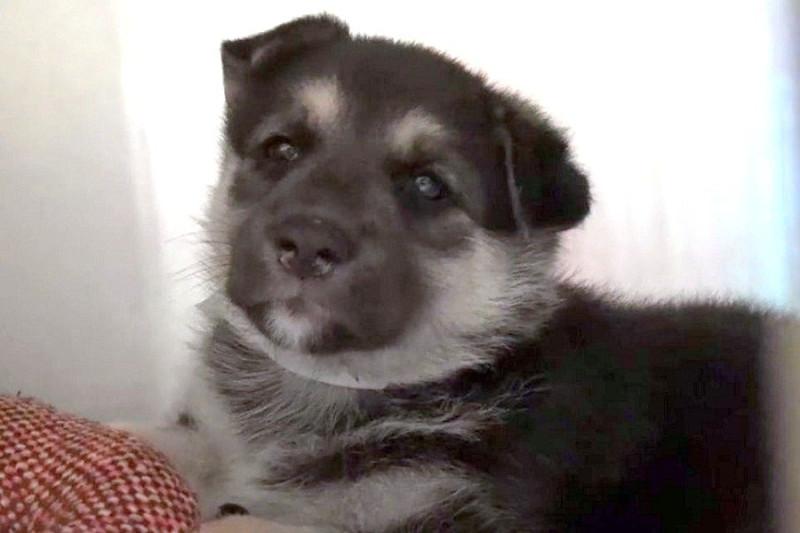 Фото: Facebook / Saving Carson Shelter Dogs /