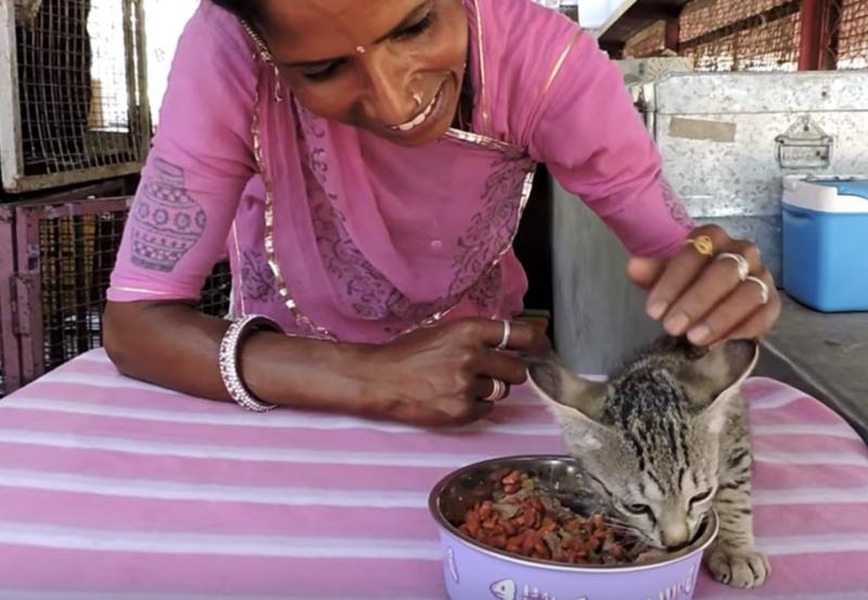 Фото: Animal Aid Unlimited /