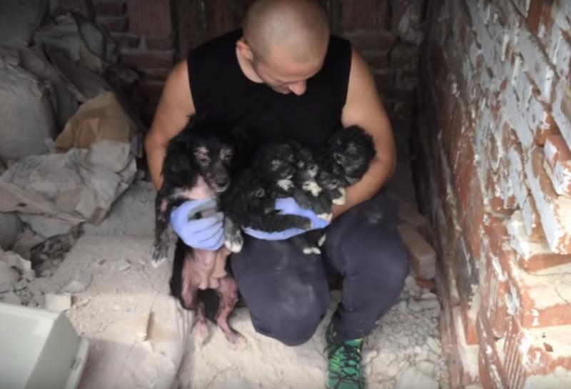 Фото: Dog Rescue Shelter Mladenovac, Serbia