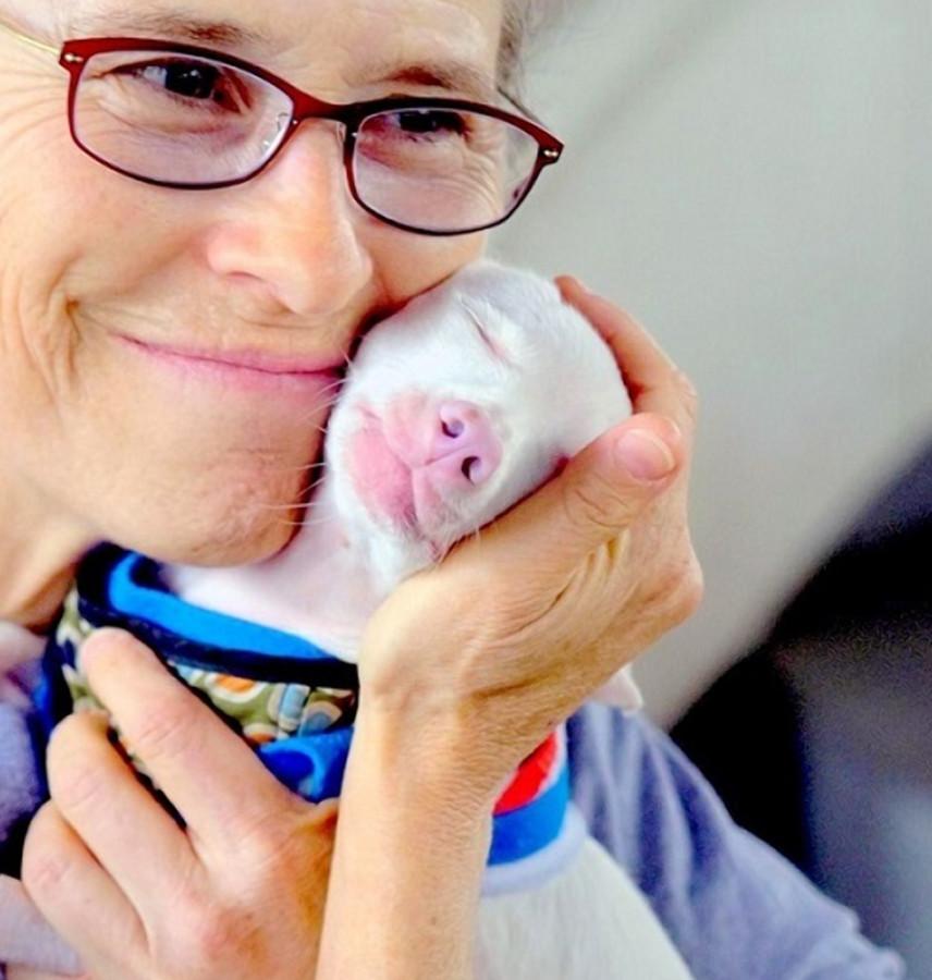 Фото: Piglet, the deaf blind pink puppy / Facebook