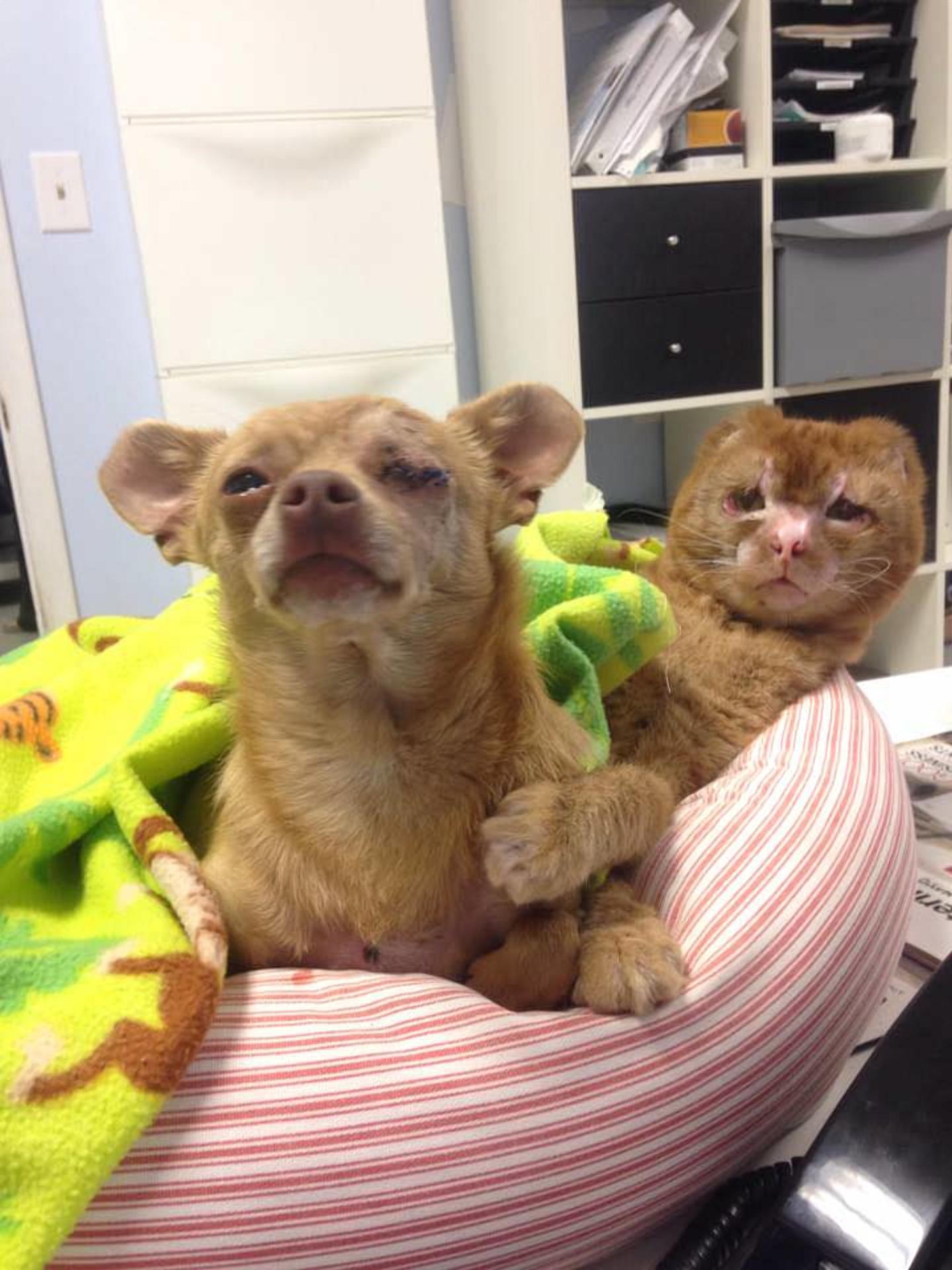 Фото: Animal Emergency Hospital / Facebook / с собакой Рокко