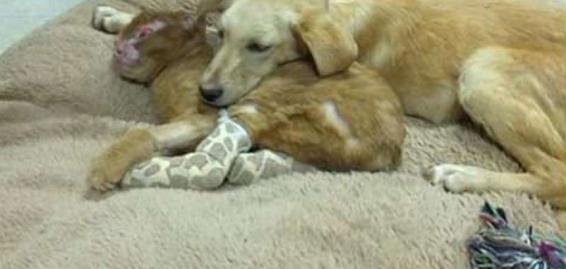 Фото: Animal Emergency Hospital / Facebook