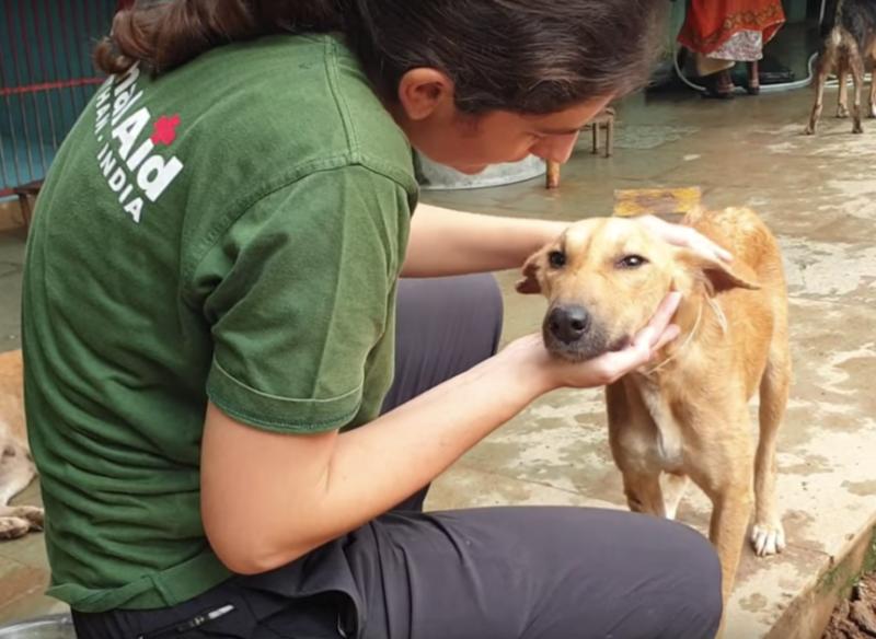 Фото: Animal Aid Unlimited