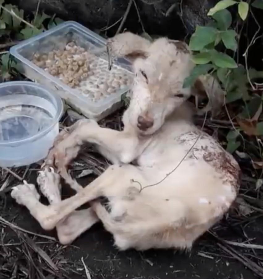 Фото: Animal Rescue