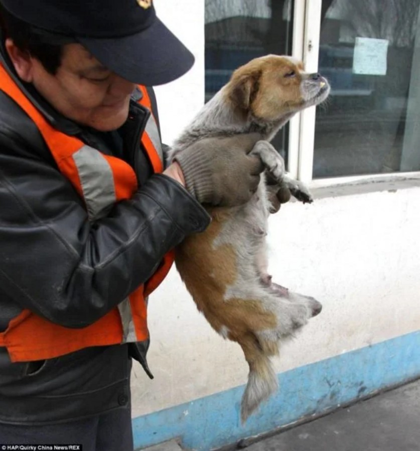 Фото: The Laika Fund For Street Dogs / Facebook