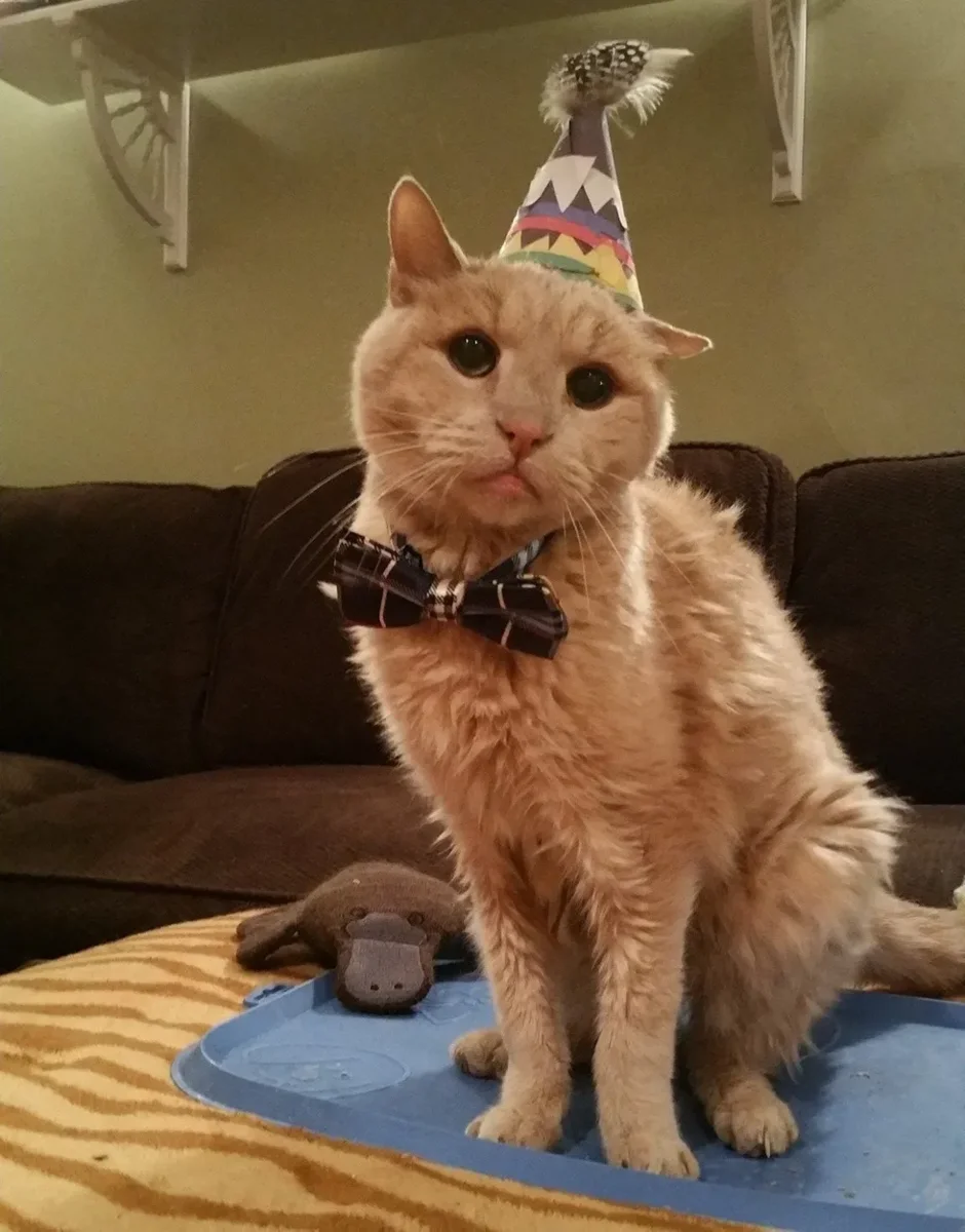 Фото: Tigger's Story- The 22yr. Old Cat &His Bucket List / Facebook