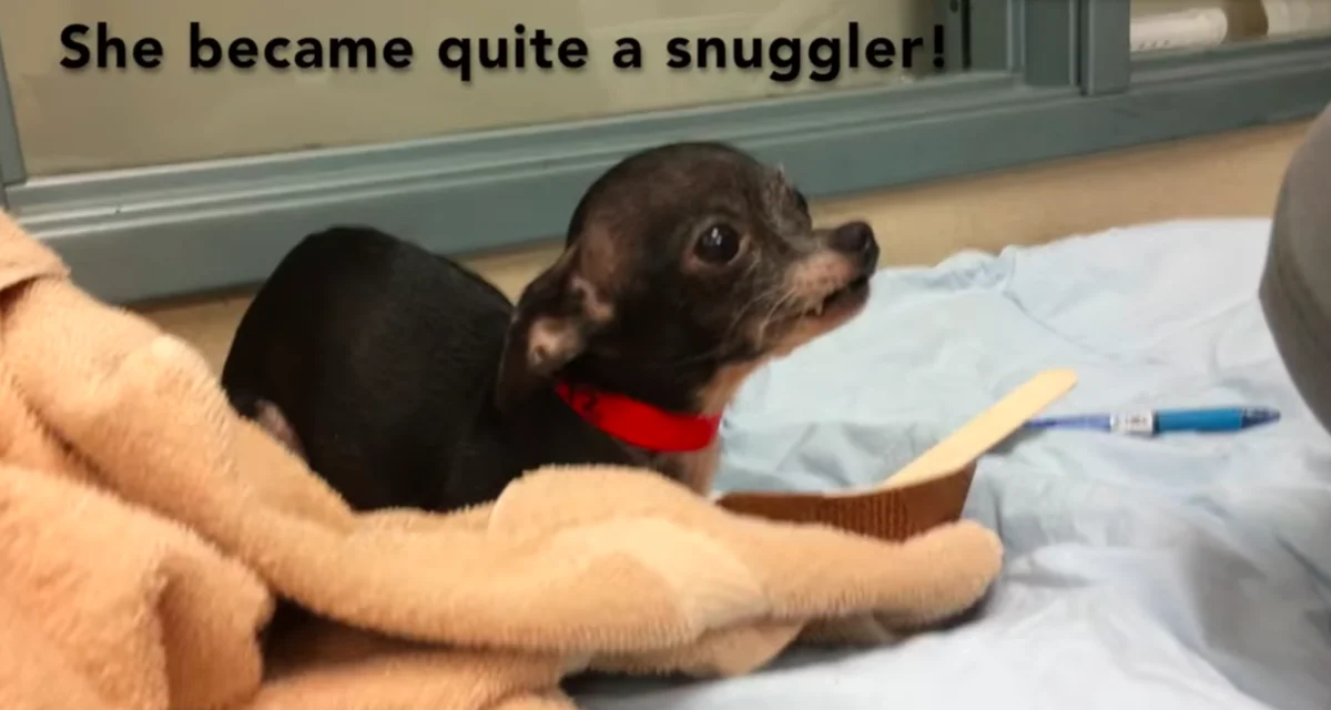 Фото: Tails of a Shelter Vet / YouTube