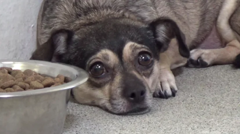Фото: Saving Carson Shelter Dogs / Facebook