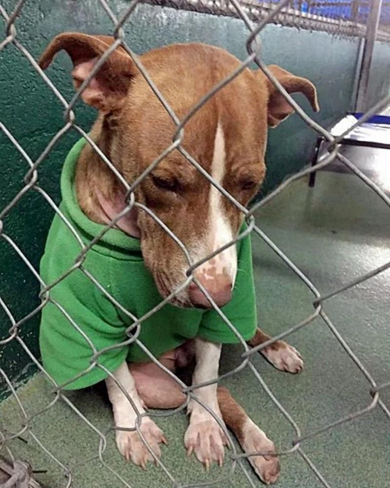 Фото: Miami-Dade Animal Service / Facebook