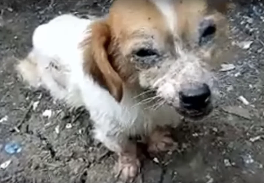 Фото: Stray Paws Animals Rescue / YouTube