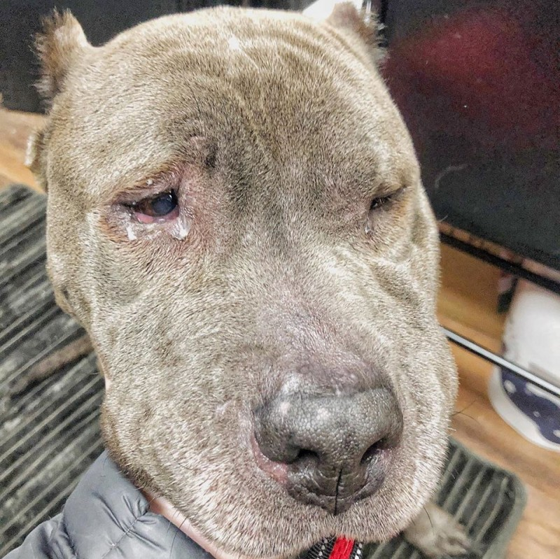 Фото: Jersey Pits Rescue / Facebook