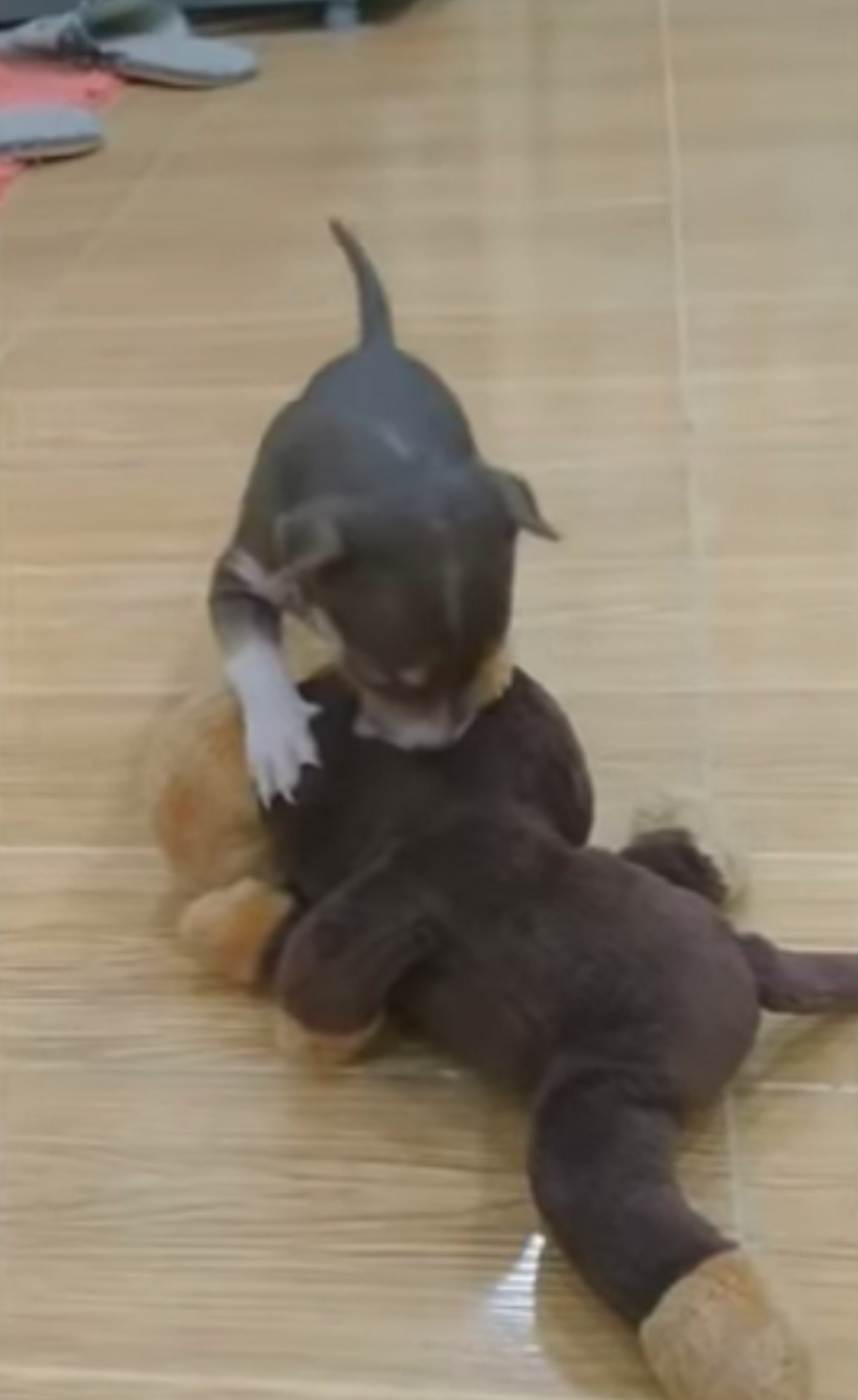 Фото: Animal Step / YouTube