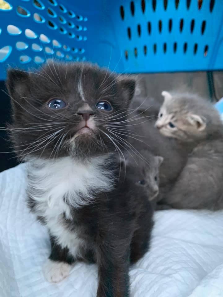 Фото: Halfway Home Animal Rescue Team