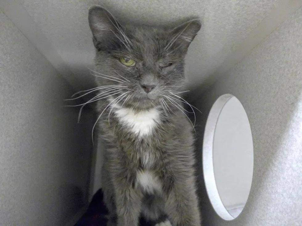 Фото: Young at Heart Senior Pet Adoptions