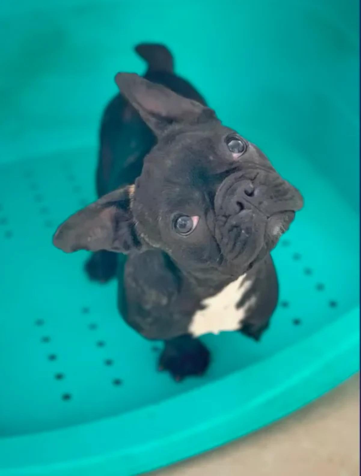 Фото: Adoption Day / The Dodo / YouTube