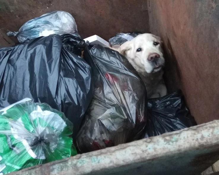 Фото: TLT.ru / Тольятти выбросили домашнего пса (даже не сдали в приют) на мусор