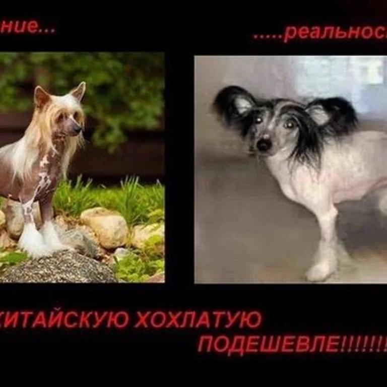 Фото: picuki.com