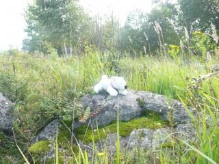 белые медведи покоряют Карелию