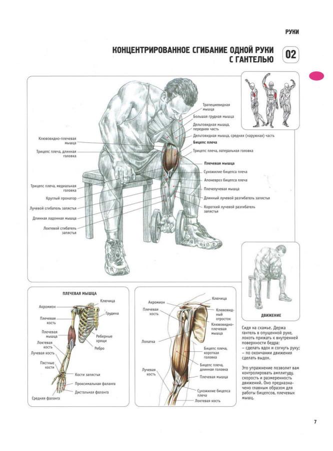 Как накачать мышцы в домашних условиях программа
