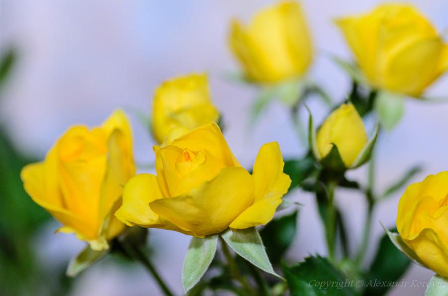20130407_182029_Цветы