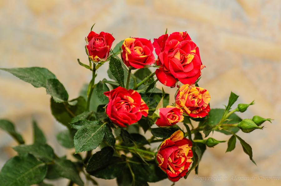 20130407_184648_Цветы