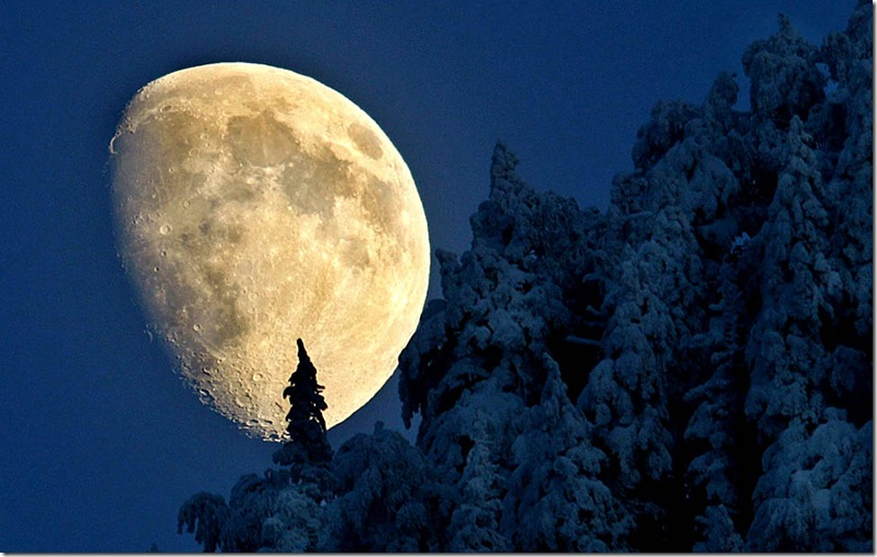 The moon rises above the snow covered trees near Igis, Canton of Grisons, Switzerland, on 16 December 2010.