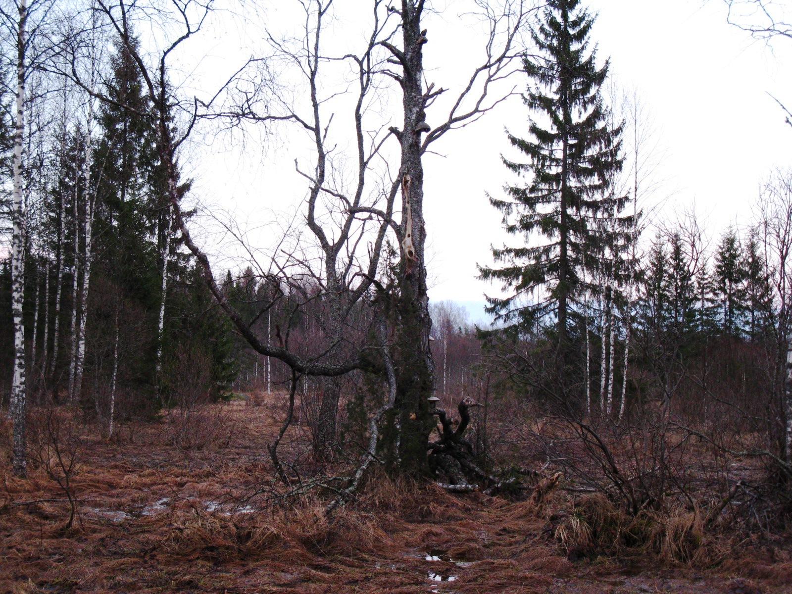 Весна- 2012 008-нов