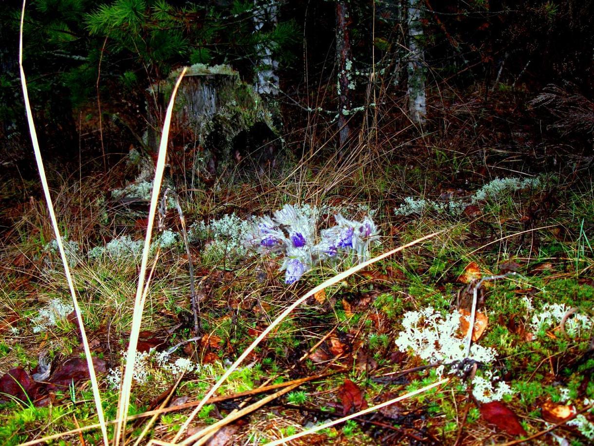 Весна- 2012 069-нов-2 ред