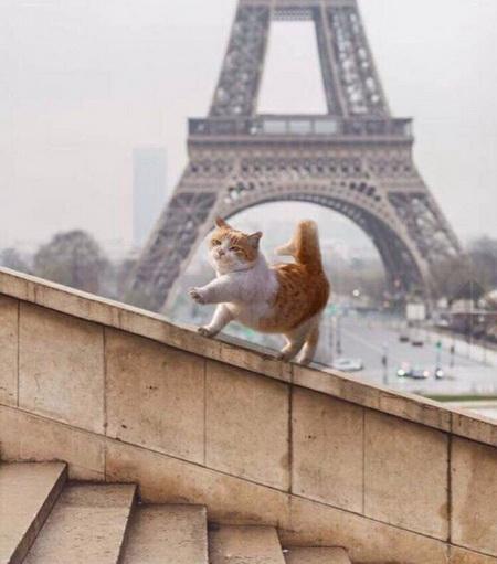 О парижских котиках
