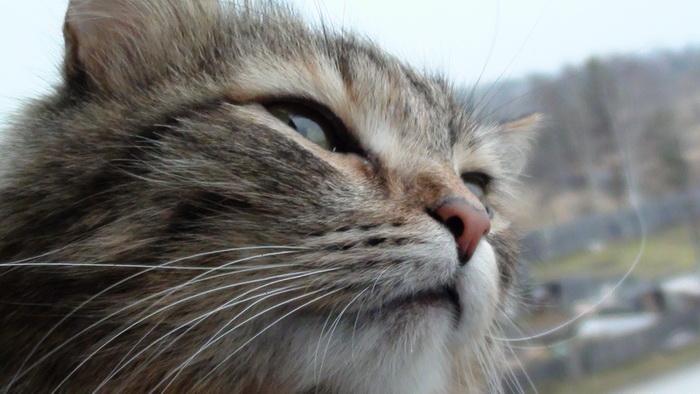 Кошка Бася нюхает воздух