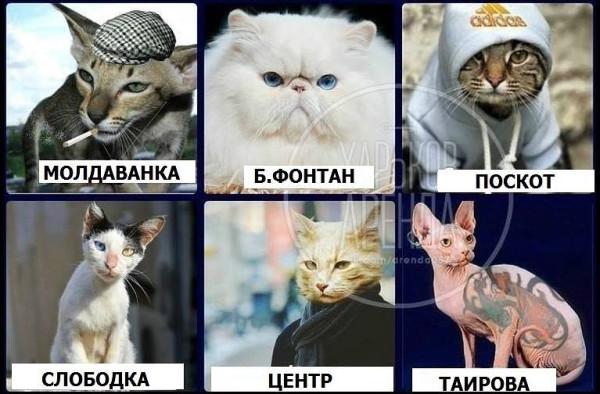 Вся Одесса