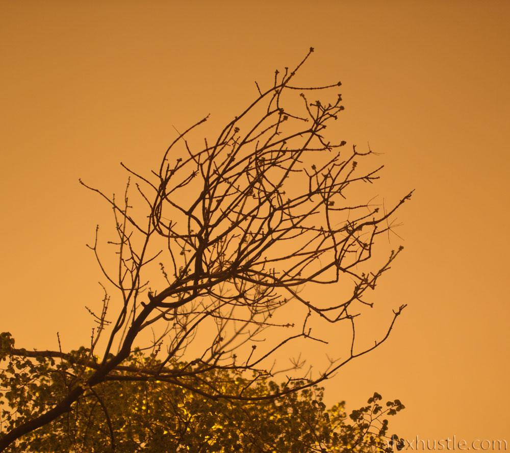 Оранжевое небо