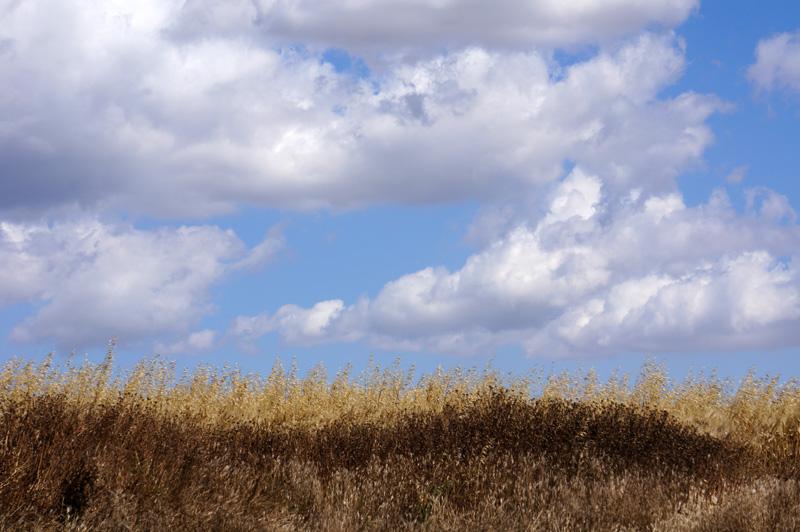Небо и поля